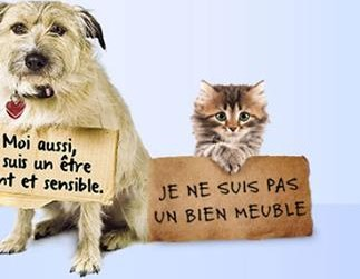 reforme statut juridique animaux