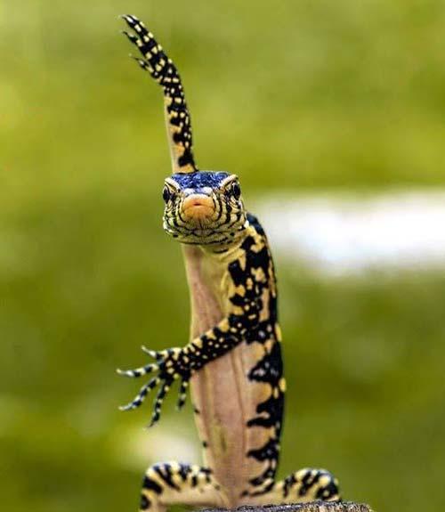 reptile ninja