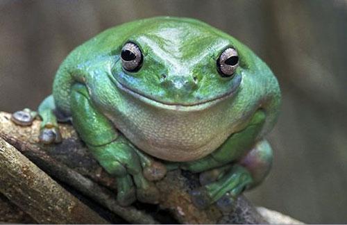sourire grenouille