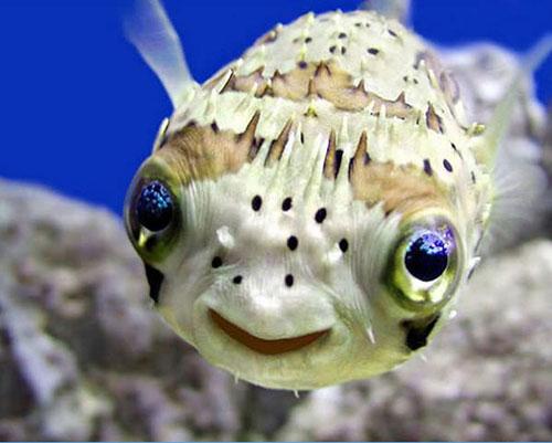 sourire poisson