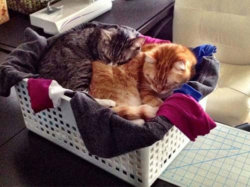 chat linge propre