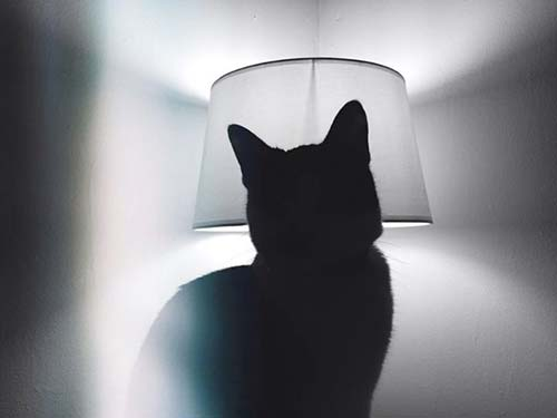 chat lumiere