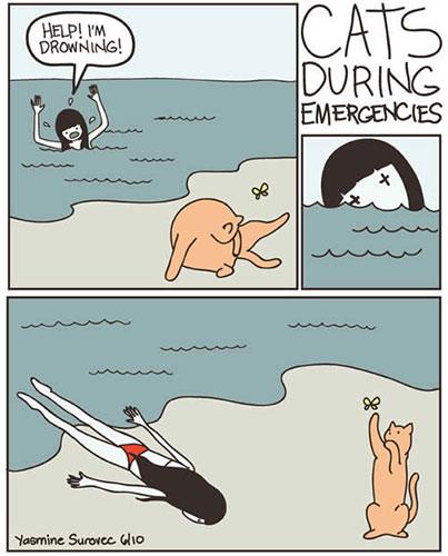 chat qui s'en fout