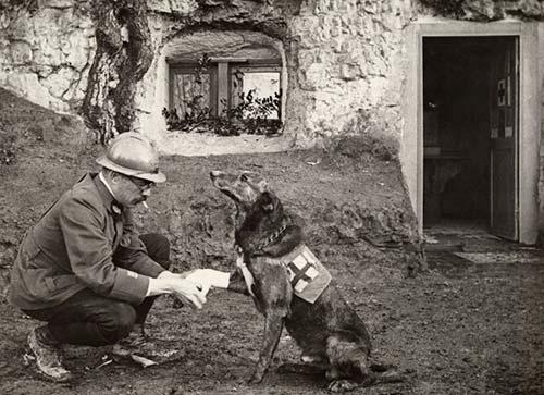 chien guerre