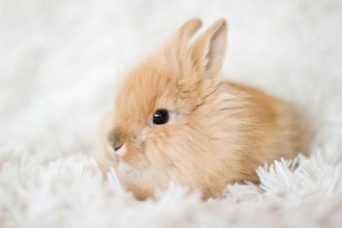 lapin fait fuir cambrioleur