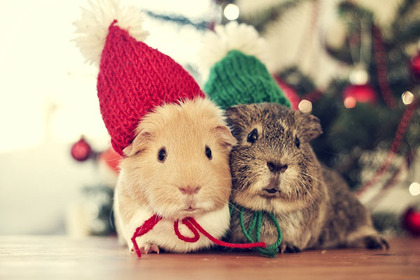 Noel pour animaux