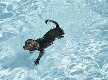 hydrotherapie pour animaux