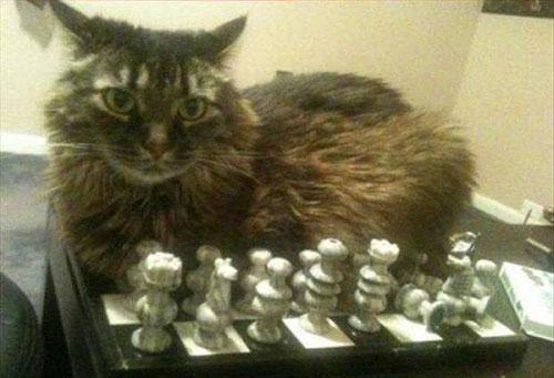 Logique des chats