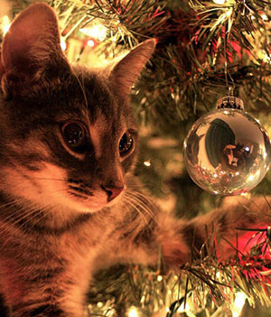 Danger Sapin de Noël pour Animaux