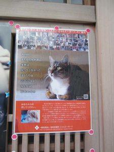 Affiche pour la protection des animaux Japon