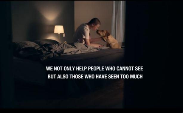 chiens d'assistance pour veterans