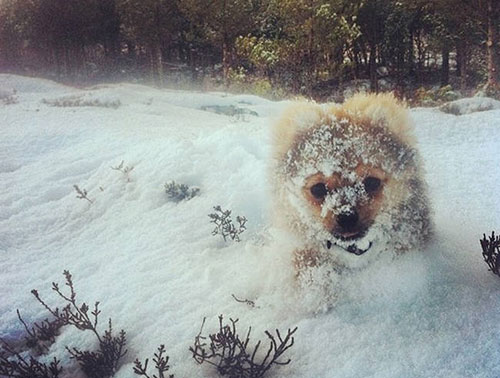 chiot neige