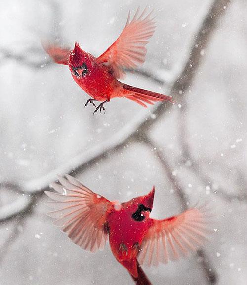 oiseau neige
