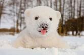 Ces animaux qui découvrent la neige