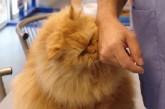 Les phéromones, une solution originale et scientifiquement démontrée pour tranquilliser votre chat