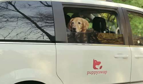 puppy swap