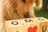 Les animaux vous souhaitent une bonne Saint Valentin