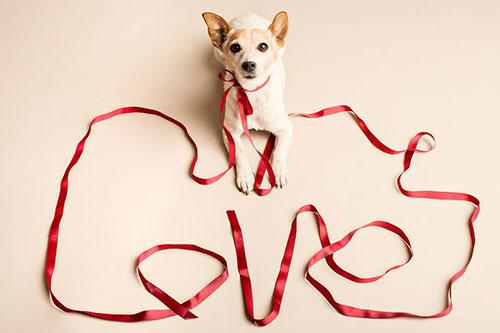 love chien