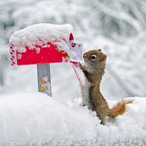 saint valentin écureuil