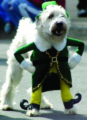 Chien Saint Patrick