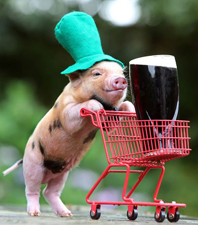 cochon Saint Patrick