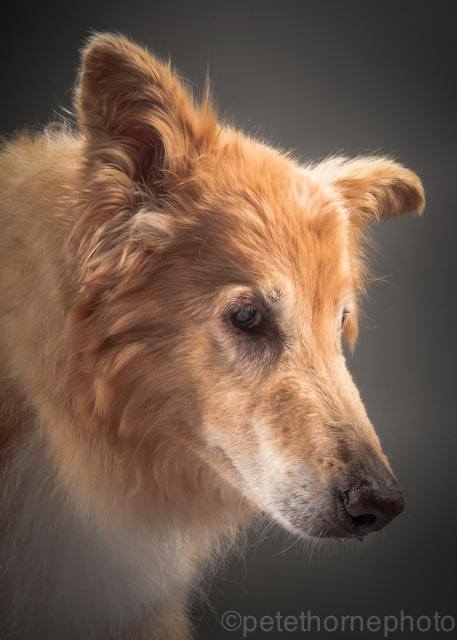 Photo chien âgé