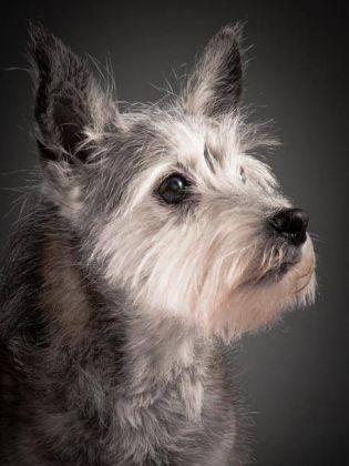 Toto, chien âgé
