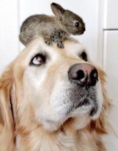 lapin avec un chien