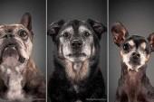 De magnifiques photos révèlent la beauté de chiens âgés