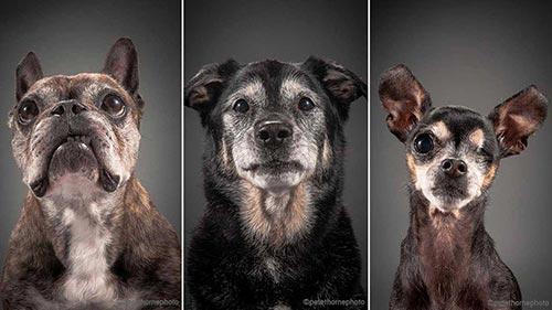 Photo de chiens âgés