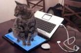 Compile des chats qui le font exprès
