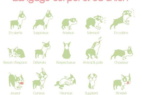 langage corporel du chien