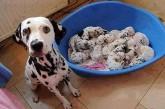 21 mamans chiens fières de l'être