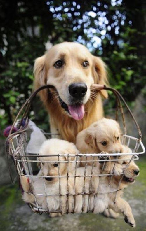 maman chien