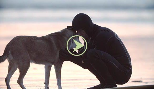 hommage video chien-Denali