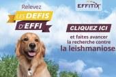 Nouvelle Campagne Effitix contre les parasites du chien