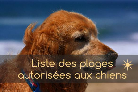 liste des plages autorisées pour chiens