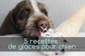 5 recettes de glaces pour chien