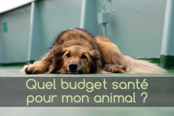 Quel budget santé pour mon animal de compagnie