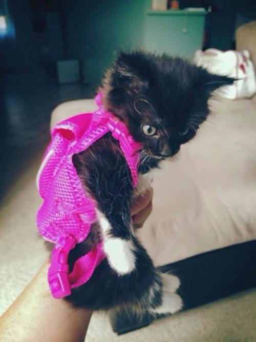 Chat prêt pour la rentrée