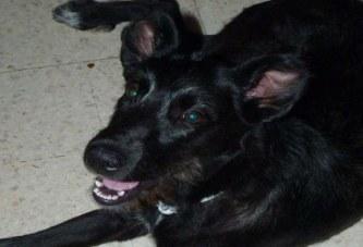 Lula, chien à l'adoption dans le Var