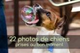22 photos de chiens prises au bon moment