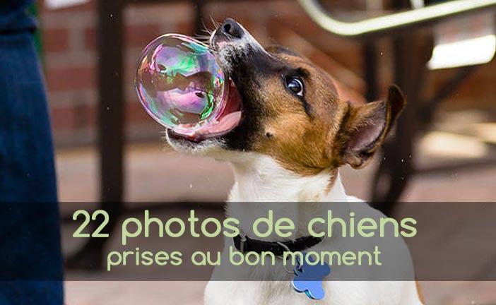 Photo de chiens prises au bon moment