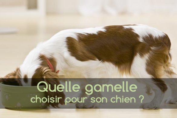 Quelle gamelle choisir pour son chien ?