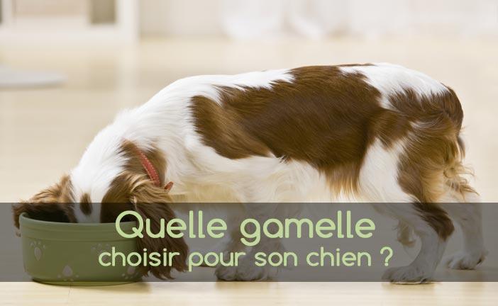 Bien choisir la gamelle pour son chien animaniacs - Cuisiner pour son chien ...