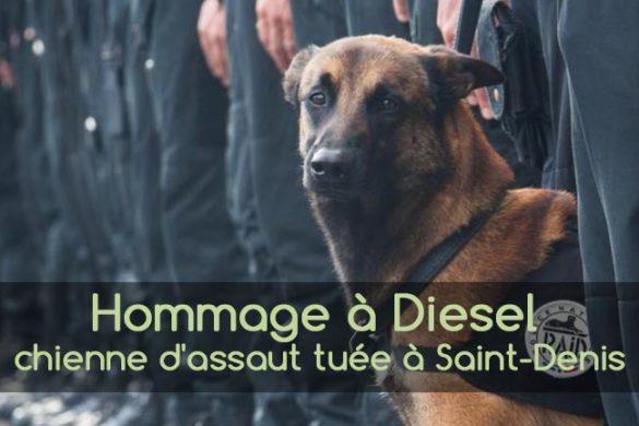 Diesel chienne d'assaut du Raid tuéeà Saint Denis