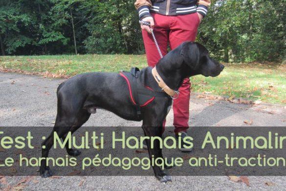 Multi Harnais Animalin - Test Animaniacs