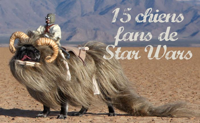 Chiens fans de Star Wars