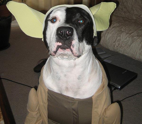 chien star wars 11
