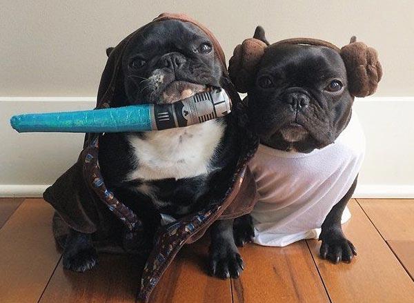chien Star Wars 14